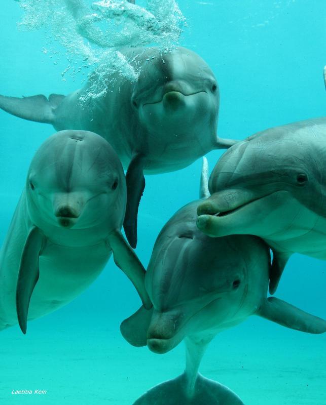 Planète Sauvage les dauphins