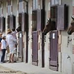 Les box du haras de Vendée