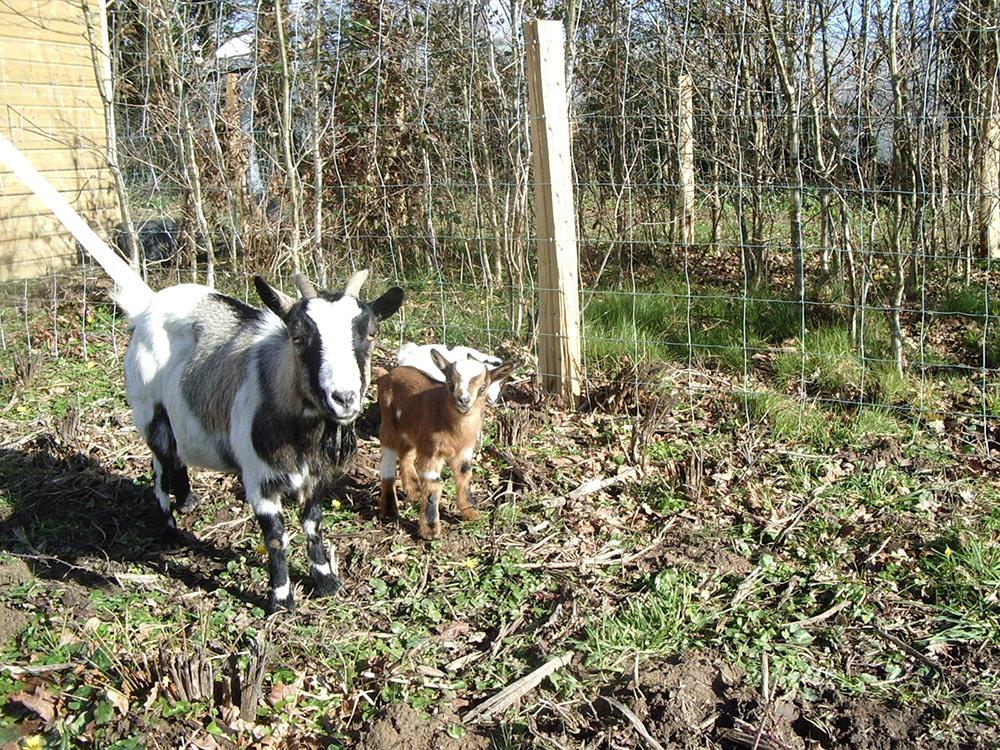 camping avec parc animalier les chèvres